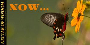 Nectar Of Wisdom